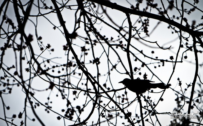 June 20, 2012 – Bird In A Tree